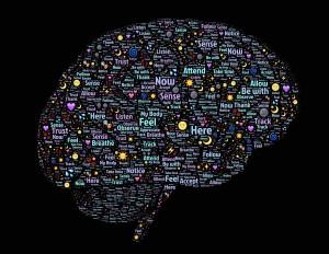 Brain Health & Function